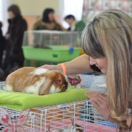 Выставка карликовых кроликов 2019 фотографии