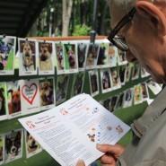 Выставка-пристройство собак ИСКРА-FEST 2018 фотографии
