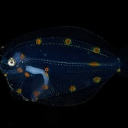 Фестиваль подводной фотографии «Дикий подводный мир» 2018 фотографии