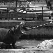 Выставка «Анатолий Гаранин. Советский союз» фотографии