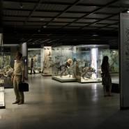 «День древнего человека» в Дарвиновском музее фотографии