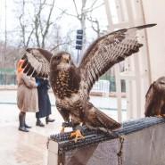 Международный день птиц впарке «Сокольники» 2018 фотографии
