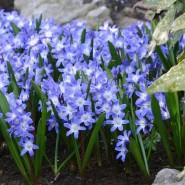 Выставка «Первые цветы весны» фотографии