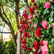 Фестиваль садов и цветов «Moscow Flower Show» 2020 фотографии