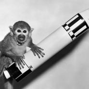 Выставка «Животные в космосе» фотографии