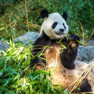 Московский зоопарк онлайн фотографии