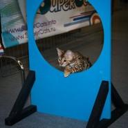 Международная выставка кошек «Кэтсбург-2016» фотографии