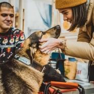 Выставка-пристройство животных из приюта «Юна-Фест» 2021 фотографии