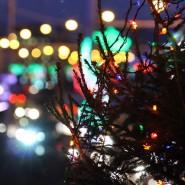 Новогодняя ночь 2016 в парке «Сиреневый сад» фотографии