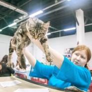 Выставка-пристройство кошек из приюта «Юна-Фест» 2019 фотографии