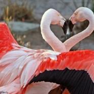 Выставка «Химия влюбленности» фотографии