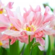 Выставка «Цветов весны причудливые краски» 2018 фотографии