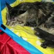 Международная выставка кошек «Мистер Кот» в Сокольниках» 2017 фотографии