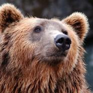 День города в Московском зоопарке 2019 фотографии