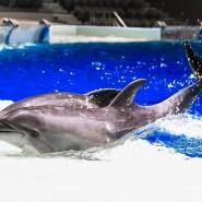Неделя китов в «Москвариуме» 2019 фотографии