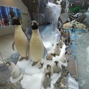 День пингвина в Дарвиновском музее 2020 фотографии