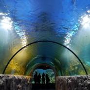 Океанариум фотографии
