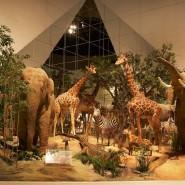 Акция «Ночь музеев» в Дарвиновском музее 2020 фотографии