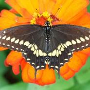 «День бабочки» в Биологическом музее 2016 фотографии