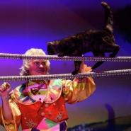 Театр кошек Куклачева фотографии