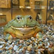 День болот в Биологическом музее 2017 фотографии