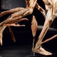 Выставка «Тайны тела. Вселенная внутри» фотографии