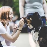 Благотворительный проект «Прогулки с собаками» фотографии
