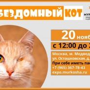 Выставка «Бездомный кот» фотографии