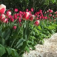 Весенний фестиваль цветов в «Аптекарском огороде» 2019 фотографии
