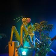 Выставка «Маленькие люди в большом мире насекомых» фотографии