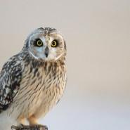 «День совы» в биологическом музее 2019 фотографии
