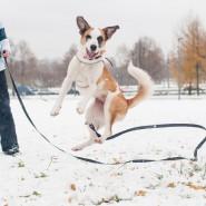 Открытие зимнего сезона в парке «Садовники» 2016 фотографии