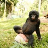 Выставка «Бонобо» фотографии
