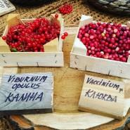 Фестиваль цветов, урожая и искусства «Краски осени» 2016 фотографии