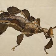Выставка «Растения и животные: параллельные миры» фотографии