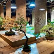 Выставка японских бонсай «Искусство бонсай» фотографии