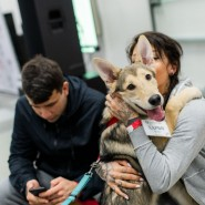 Благотворительный фестиваль «Собаки, которые любят» 2019 фотографии