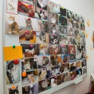 Выставка «Неслучайная встреча» фотографии