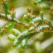 Экологическая акция «Вторая жизнь новогодней ели» 2017 фотографии
