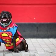 Фестиваль «Мой пес – супергерой!» 2020 фотографии
