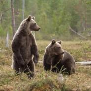 Выставка «Дикая природа России» 2019/2020 фотографии