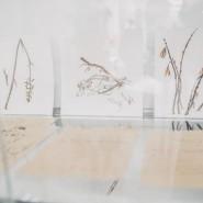 Выставка «Флора. Жизнь» фотографии