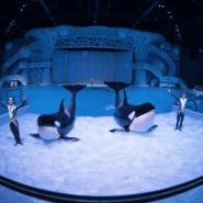 Шоу «Тайна четырех океанов» 2018 фотографии
