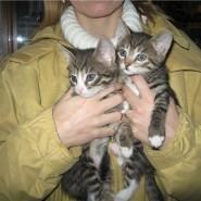 Выставка кошек «Юна-фест» фотографии