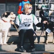 Выставка бездомных собак и кошек «Надо брать! Осенью!» 2017 фотографии