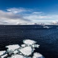 Выставка «Из Русской Арктики с любовью» фотографии