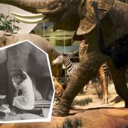 Выставка «Тайны Дарвиновского музея» фотографии