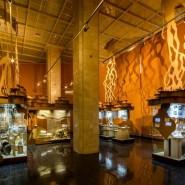 Фестиваль науки в Дарвиновском музее 2020 фотографии