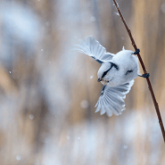 Выставка «Дикая природа России» фотографии