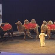 Цирк братьев Запашных «Sиsтема» фотографии